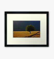 One Tree Hill Framed Print