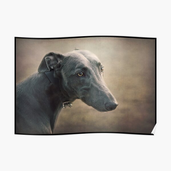 The Sighthound Poster