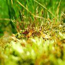 Moss 2 by ciriva