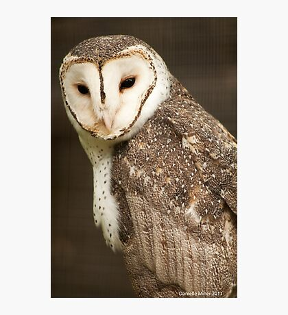 Masked Owl Photographic Print