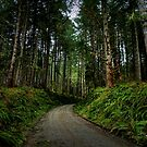 Road In The Woods by Charles & Patricia   Harkins ~ Picture Oregon