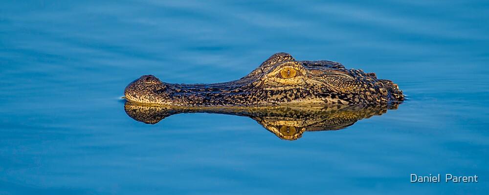 Gator Island by Daniel  Parent