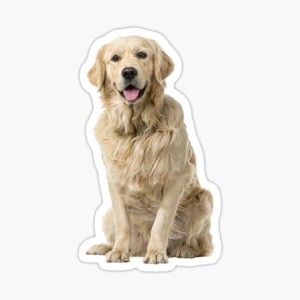 Sunkist Sticker