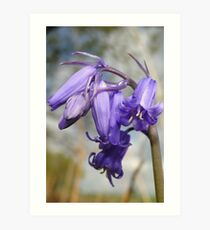 Blubells Ring, Are You Listening Art Print