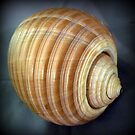 Shape and pattern in a shell - 5 by bubblehex08