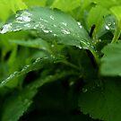 Morning dew 1 by ciriva