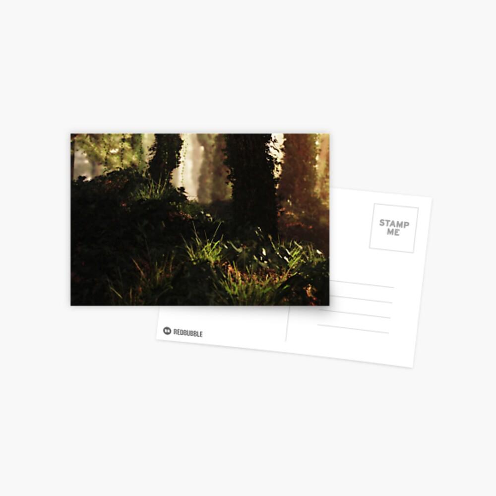 Sunset Forest Postcard