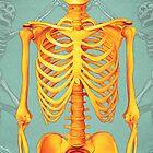 Skeleton by Shannon Posedenti
