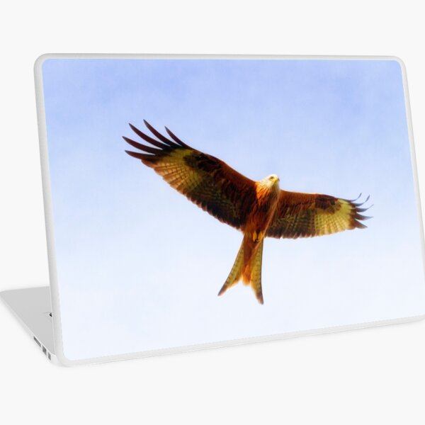 Red Kite in flight Laptop Skin