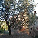 Tuscany Farmhouse by Barbara Wyeth