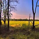 Morning Field by aprilann