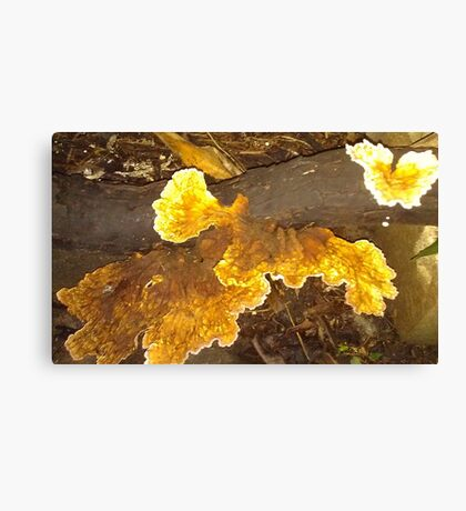 Yellow Fungi in my Garden, Canvas Print
