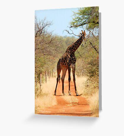 SORRY..., TAKE ANOTHER ROAD! - THE GIRAFFE – Giraffa Camelopardalis (KAMEELPERD) Greeting Card
