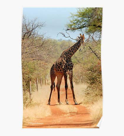 SORRY..., TAKE ANOTHER ROAD! - THE GIRAFFE – Giraffa Camelopardalis (KAMEELPERD) Poster