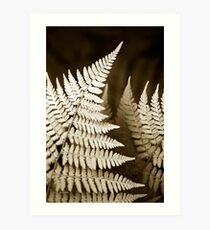 Monochrome Fern Art Print