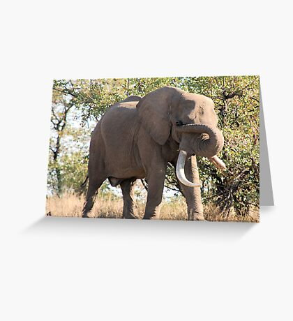 OUCH! GOT SOMETHING IN MY EYE - THE AFRICAN ELEPHANT – Loxodonta Africana Greeting Card