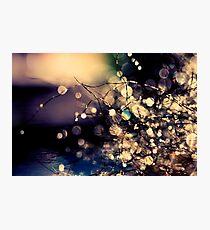 Where fairies dream. Photographic Print