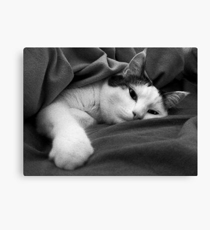 Munchkin in Mama's bed! Canvas Print