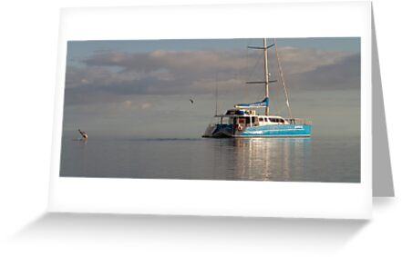 Monkey Mia Dolphin Resort - Western Australia by Frank Moroni