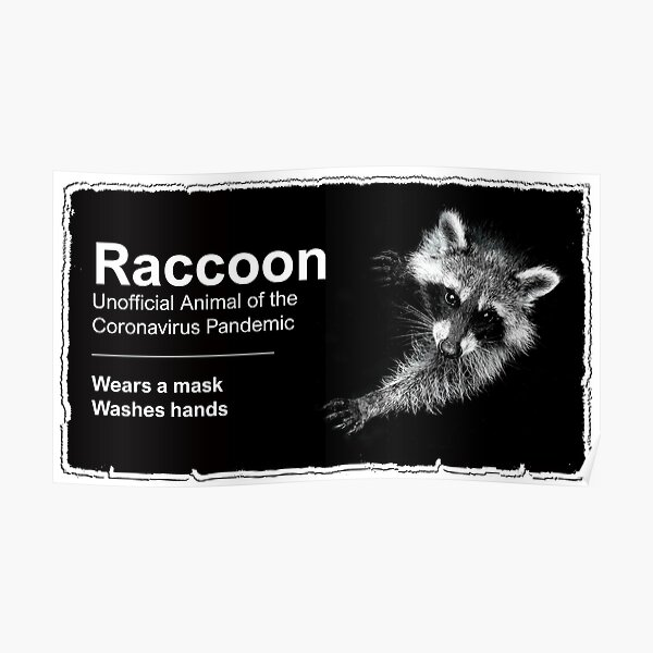 The Raccoon  Poster