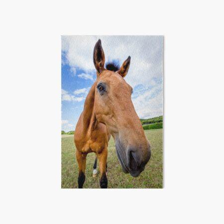 Horse of a Dun Colour Art Board Print