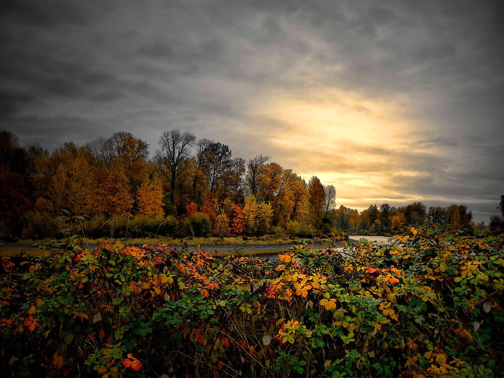 River Magic by Charles & Patricia   Harkins ~ Picture Oregon