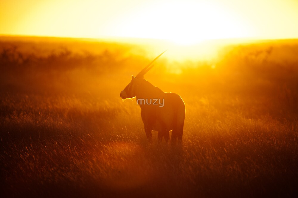 Oryx at sunset by muzy
