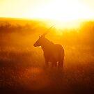 Oryx at sunset by muzy