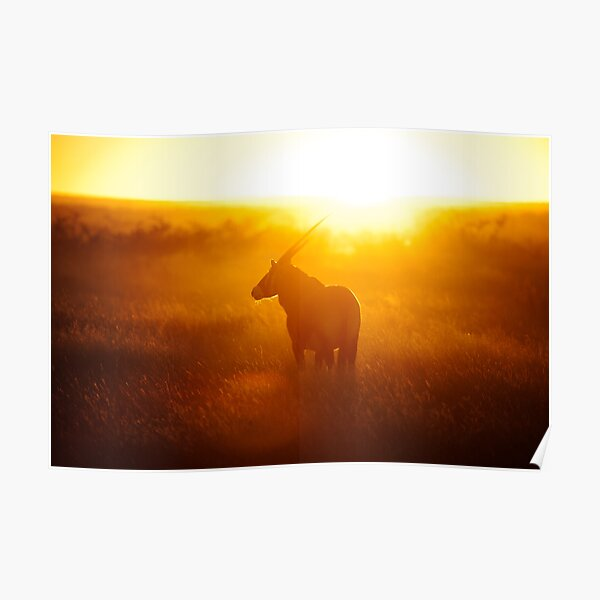 Oryx at sunset Poster