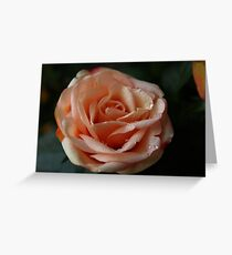 Salmon-Colored Rose Greeting Card