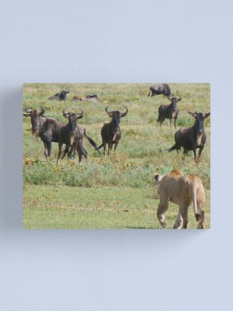 Alternate view of Wildebeast for lunch Canvas Print