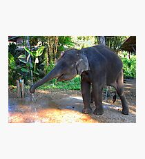 Water for Elephant Photographic Print