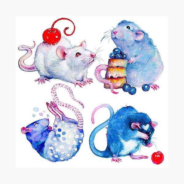 Sweet Rats Photographic Print