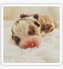 Australian Shepherd Sleeping Beauty Sticker
