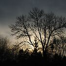 Tree in the Evening Sky by Sandra Fortier