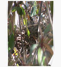 Bird In Nest Poster Poster