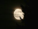 SUPER MOON 2012 by skreklow