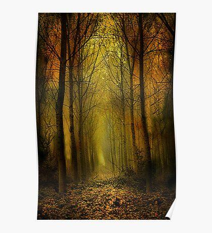 Birch trees. Poster