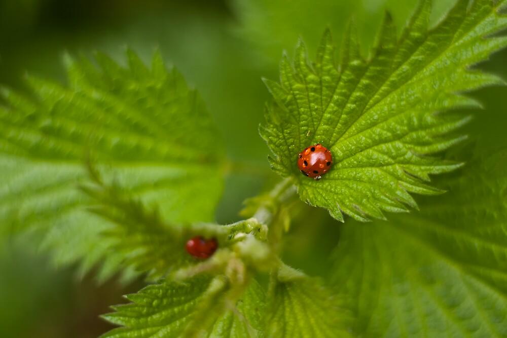 Wet Ladybug by Vicki Field