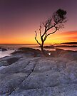 """That Tree"" ∞ Binalong Bay, Tasmania - Australia by Jason Asher"