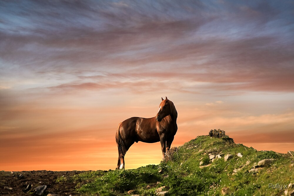 Standing Proud - The Stallion by Polly x
