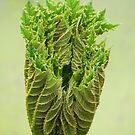 Triffids in the spring ! by John Dalkin