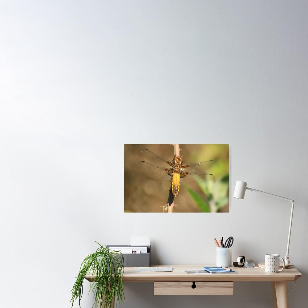Broad bodied Chaser, Libellula depressa Poster