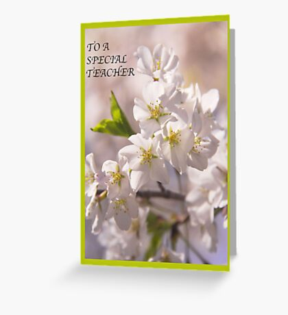 To A Special Teacher with Cherry Blossoms Greeting Card Greeting Card