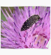 Pollen Spreader Poster