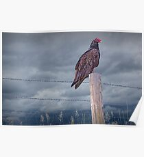 Vulture sitting on a Fence Post Poster
