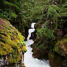 Avalanche Creek by Jeff Johannsen