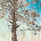 Tree Of Life by Katayoonphotos