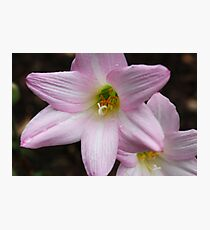 Pink flowers covered in dew Photographic Print