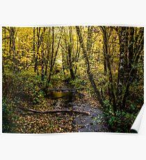 Creeks #44564 Poster